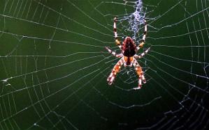spider_2126798b